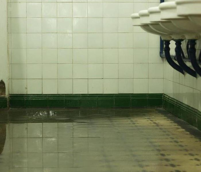 Water Damage After a Toilet Flood: How to Stop Your Business From Going Down the Drain