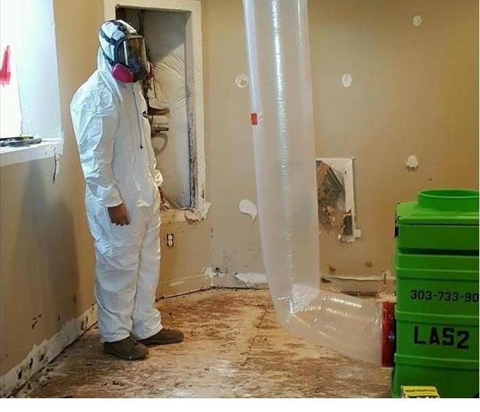 Mold Remediation Bread Is Superfood for Mold