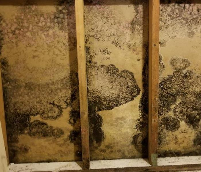 Mold Remediation What You Can Expect During Commercial Mold Remediation